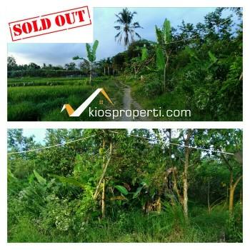 Dijual Murah Kebun Buah Kawasan Tanah Subur Sleman Yogyakarta
